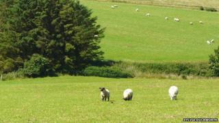 Farmland Scotland