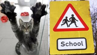 Cat and school road sign