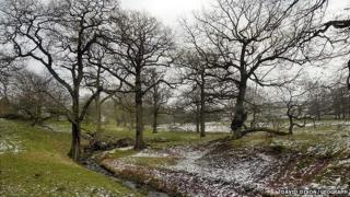 Woodland in Lyme Park