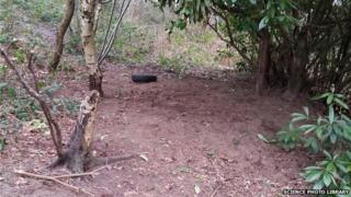Site of the destroyed badger sett
