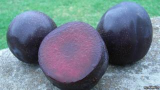 Three Queen Garnet plums on a rock
