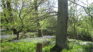 Spring woodland at the University of Edinburgh