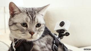 Cat wearing camera