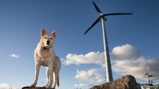 A dog and a wind turbine