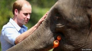 "Prince William meets a rescued elephant called ""Ran Ran"" at the Xishuangbanna Elephant Sanctuary"