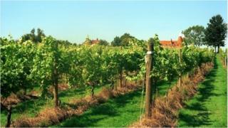 Vineyard in Wadhurst