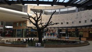 Milton Keynes oak tree