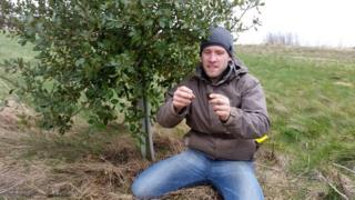 Truffle tree