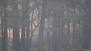 Horsell Common fire