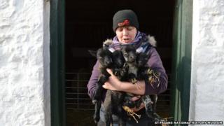Quad lambs