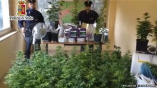Police display the confiscated cannabis plants