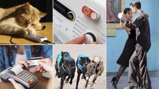 Cats, Dash button, dancing, greyhounds, and restaurant payment (clockwise from top left)