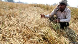 Unseasonal rains have destroyed Ram Lal's crops