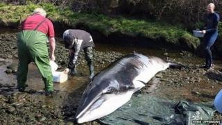 The whale was beached in the Roughty River in Kenmare, about 3km inland