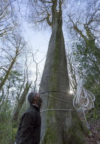 Charlie Cain with the beech tree at Devil's Dyke