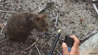 Still taken from the court video of Vallet and Batrikian's burning of a quokka, provided by WA Today