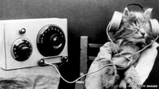 cat listening to old fashioned radio