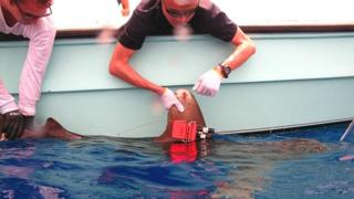 Shark speed sensor