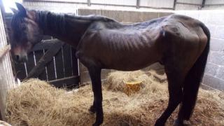 This horse in Haverfordwest was found in a poor condition