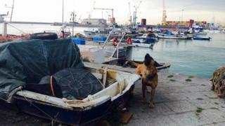 A mastiff guards boats in Catania port, Sicily - April 2015
