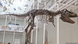 Dinosaur in the National Museum of Scotland