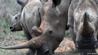 A family of White-Rhinos is seen on August 7, 2014 at the Ol Jogi rhino sanctuary