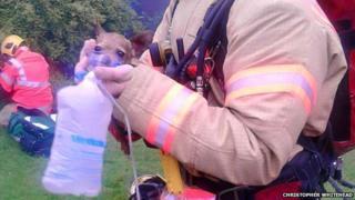 Dog given oxygen