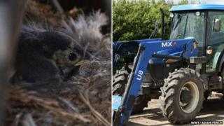 Chick in nest and tractor