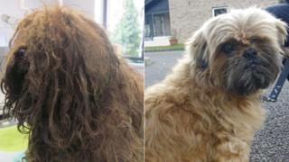 Matted dog (before and after)