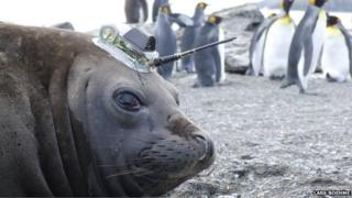 Seal with tag