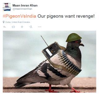 Pigeon meme