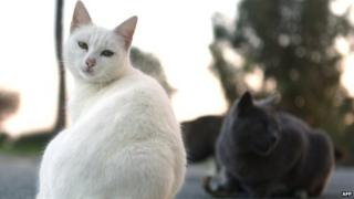 A white cat looking at the camera with other cats sitting behind