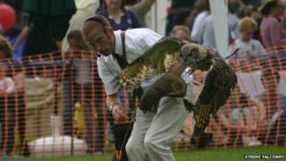 Owl taking part in display