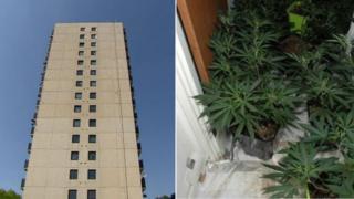 Cannabis farm flats