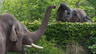Elephants at a zoo in Leipzig (May 2015)