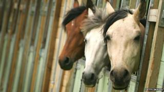 Three horses sticking their heads out of their stable doors