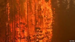 Trees are consumed by flames as an out of control wildfire burns near Willow, Alaska on 14 June, 2015