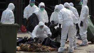 香港政府人員將宰殺的家禽放進垃圾膠袋內