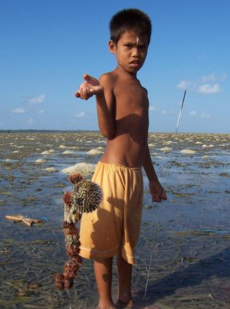 An indigenous child fisher in Indonesia collecting urchins and porcupine fish in seagrass