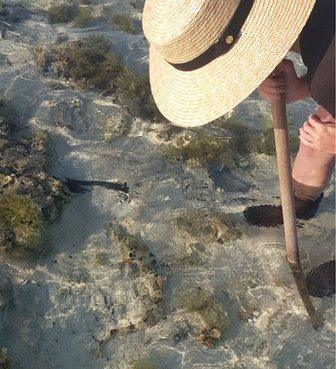 A woman in a broad hat bends over some shallow water, a small shark is visible
