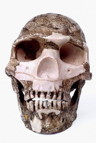 Skhul skull