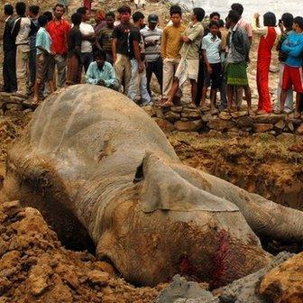 Dead elephant in Kaziranga national park