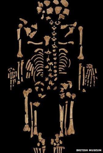 Kkeleton