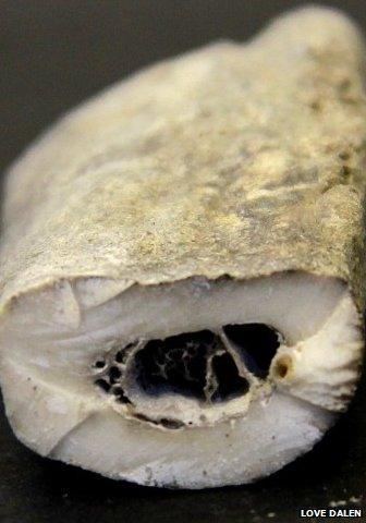 Wolf Bone