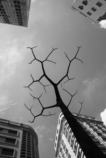 A tree and buildings in Sao Paulo