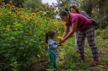Jazmin Sanchez, janda Alberto, memberikan bunga marigold kepada anaknya di kebun keluarga di Acatlán.