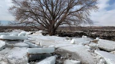 ice chunks near a tree