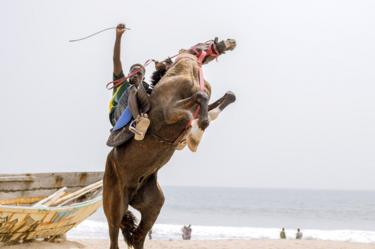 Horse rearing on the beach