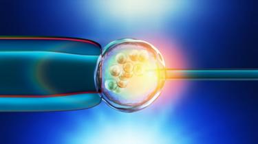 Illustration of a in-vitro fertilization of an egg cell