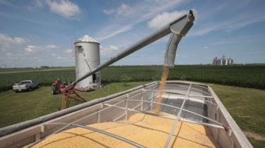 Farmer John Duffy loads soybeans from his grain bin onto a truck before taking them to a grain elevator on June 13, 2018 in Dwight, Illinois.